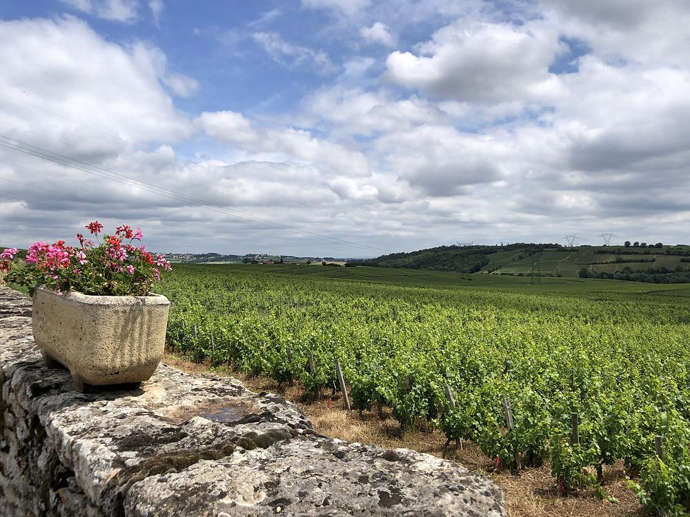 vineyards in Pouilly-Fuisse wine region, Pouilly village