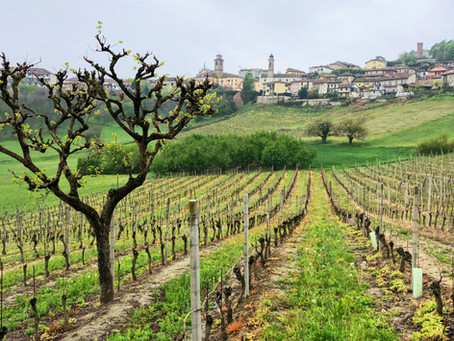 Italian Sparkling Wines from Moscato d'Asti DOCG