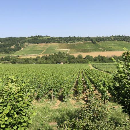 Bouzeron - Burgundy's Top Secret