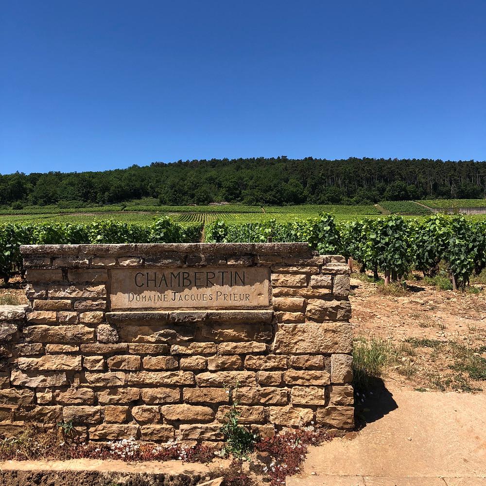 Domaine Jacques Prieur vineyard in Gevrey-Chambertin Cote de Nuits in Burgundy