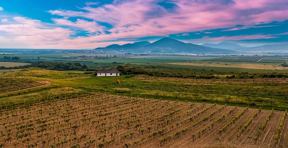 tokaj vineyard during sunset on a tokaj wine trip and tasting
