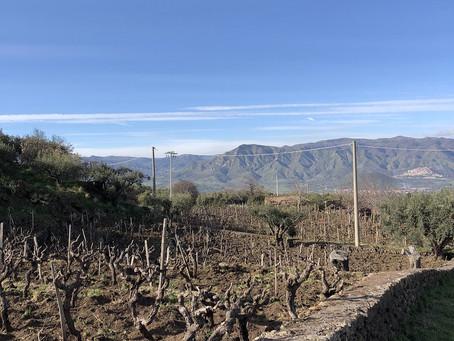 Etna Wine Region. Visiting Pietradolce