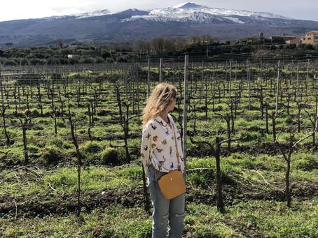 Etna Wine Region. Vineyards in lava stones