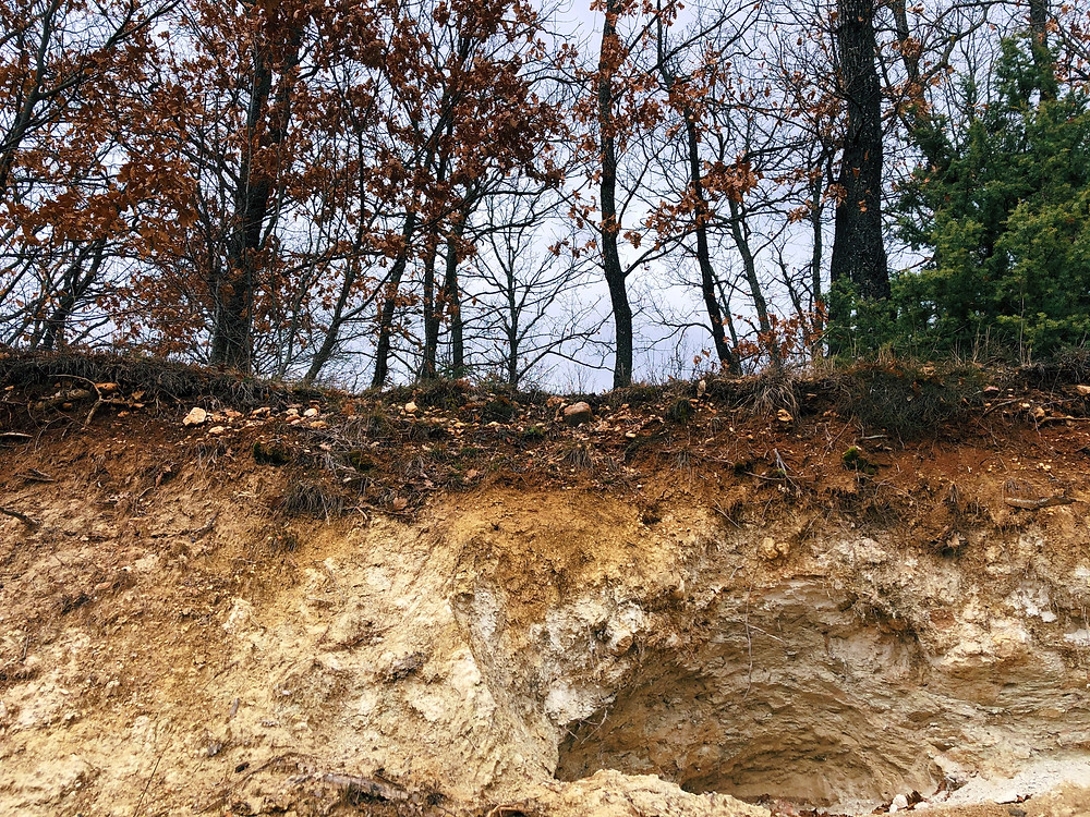 What you see above is not just a forest pic - it's a perfect example of how layered the soil is. Rich and fertile top layer is very thin, afterwards it's all marl or actually, bentonite - the impure clay which is used for clarifying wine by bounding particles in it.