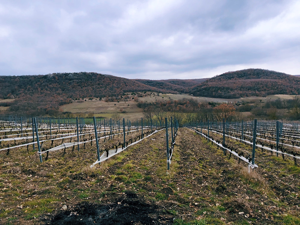 winery visit and tasting Turkish wines on the Thracian wine route at Chamlija winery