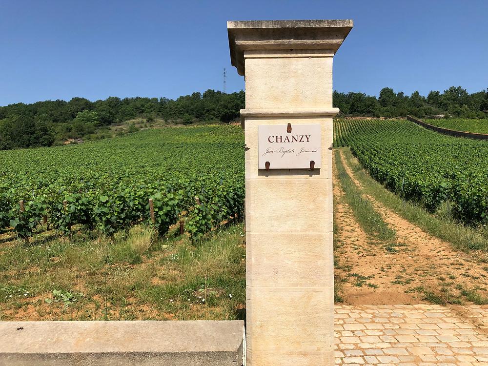 Aligote vineyards in Bouzeron AOC in Burgundy