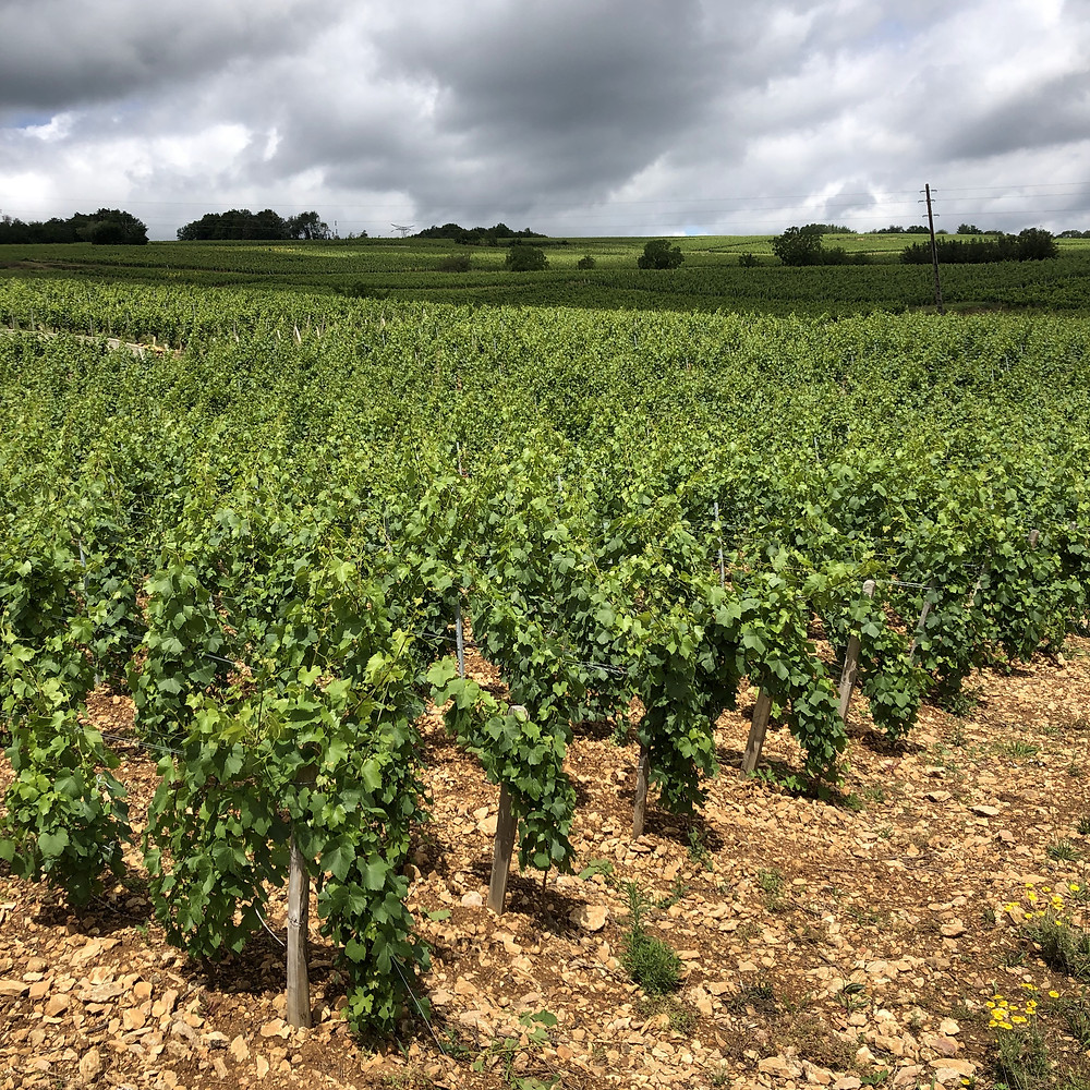 Pouilly Fuisse Southern Maconnais wine region