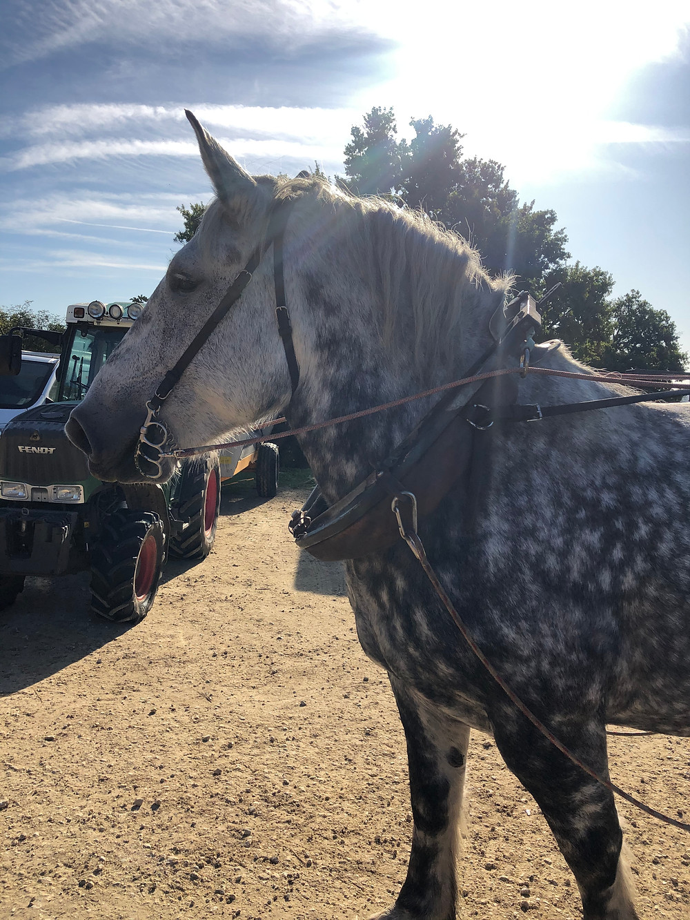 horse ploughing in biodynamic winery in Bordeaux at Chateau Le Puy visit