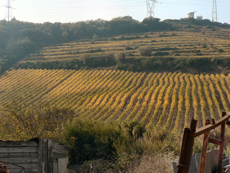 Bucelas Wine Region - the kingdom of Arinto
