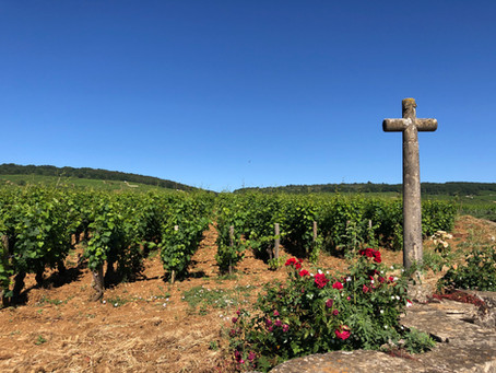 Discover Burgundy. Vosne-Romanée - the village of finest wines on Earth