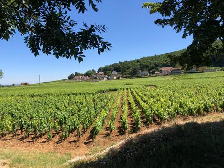 Domaine Trapet-Rochelandet - eco-conscious wines of Gevrey-Chambertin