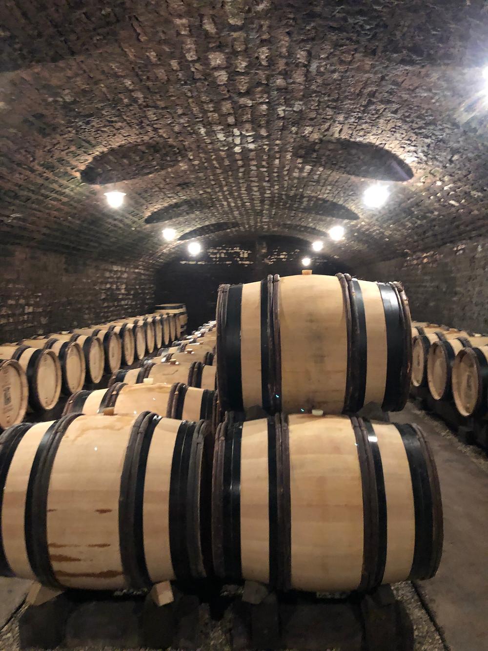 Oak barrels with wine in the underground cellar in Meursault at Domaine Jean Marie Bouzereau