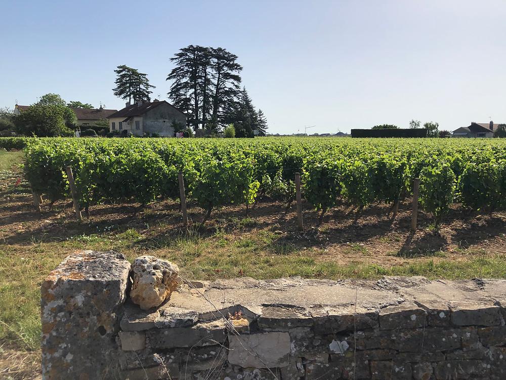 Meursault wine tour in Burgundy on a wine study trip