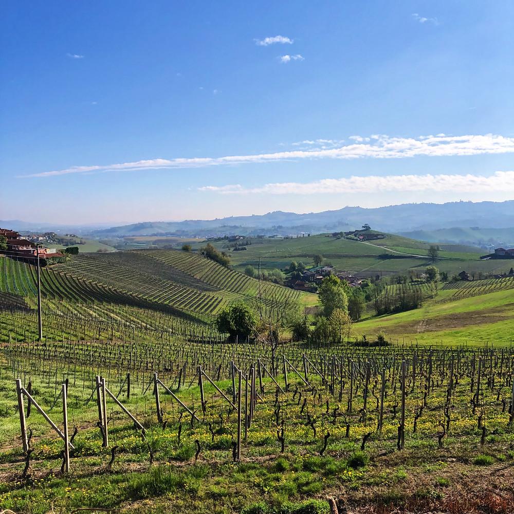 Elio Altare Nebbiolo vineyards in La Morra overlooking Barolo and Castiglione Falletto towns