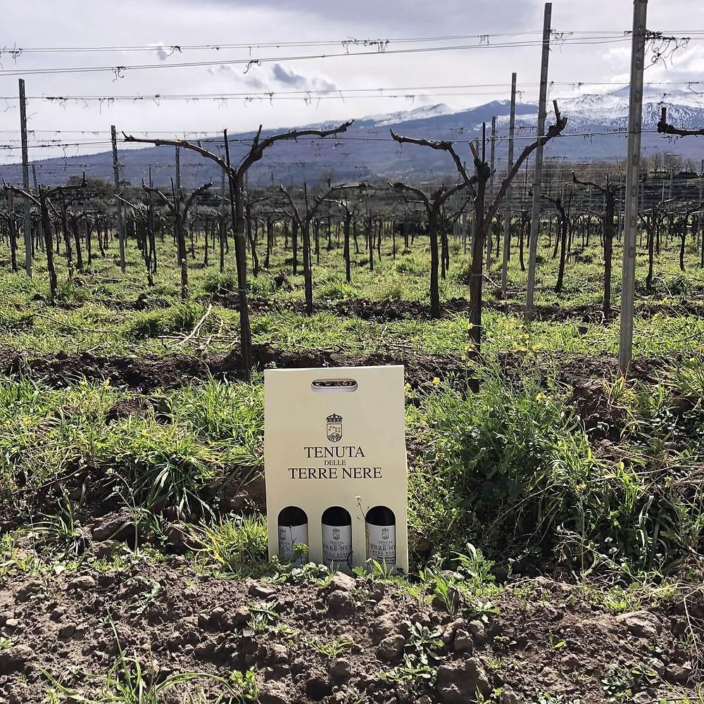 Tenuta Terre Nere wine tasting at Calderara Sottana vineyard with a view of Etna volcano