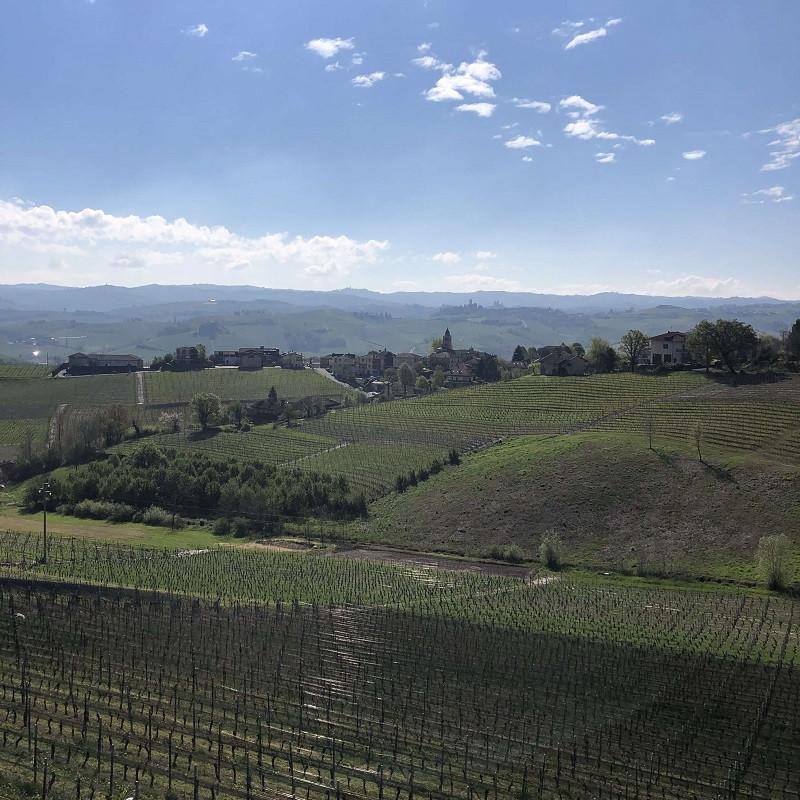 Nebbiolo Arborina vineyards with hail protection in Barolo DOCG in La Morra