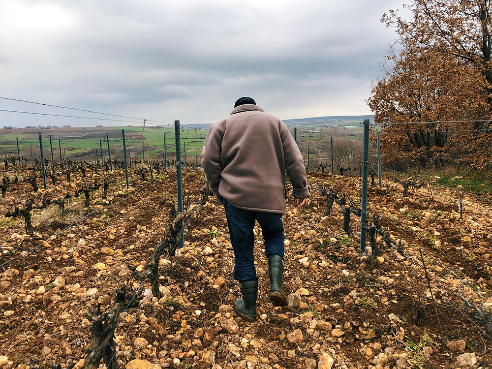 Visiting wineries in Turkey on the Thracian wine route and wine tasting and vineyard tour at Chamlija winery in Kirklareli