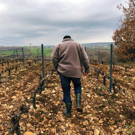 Chamlija - the winery of the Thracians