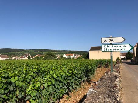Discover Burgundy. Meursault - the land of the finest Chardonnay