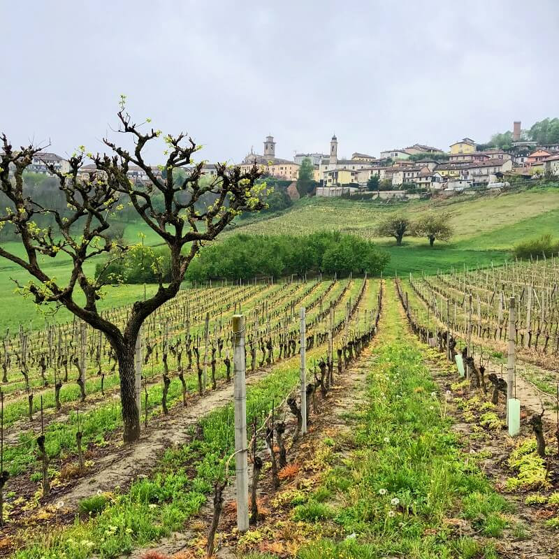 Moscato d'Asti vineyard with a view of a medieval town in Castagnole Lanze Piemonte area