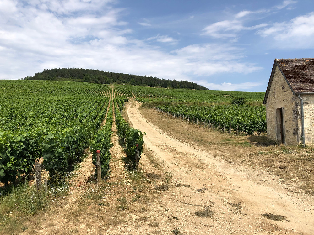 Route des Grands Crus in Chablis wine region in Burgundy France