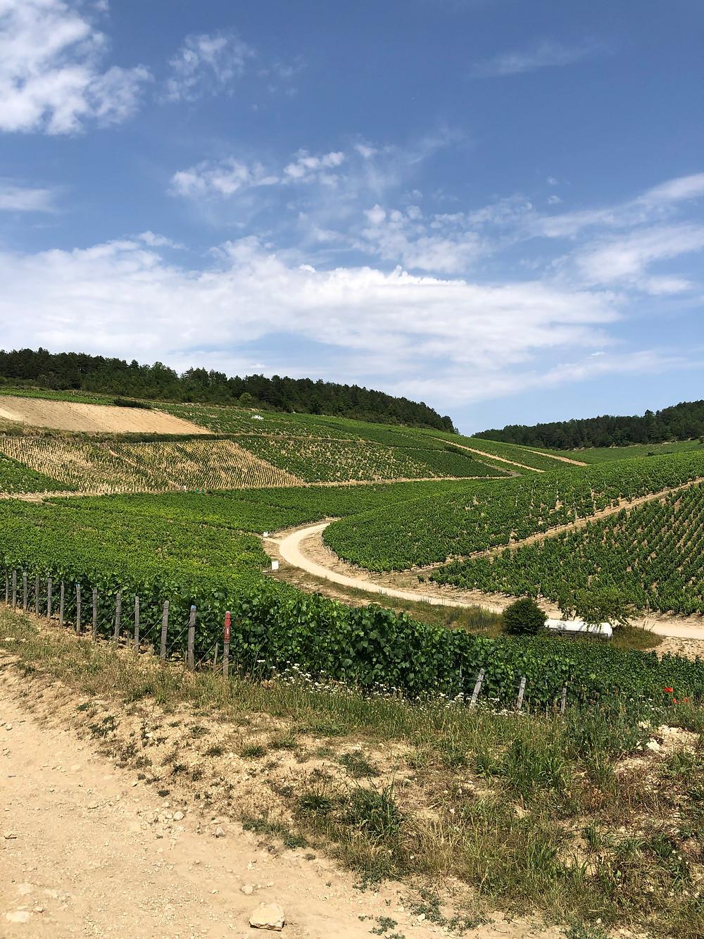 Grand Cru and Petit Chablis vineyards in Burgundy on a wine study trip