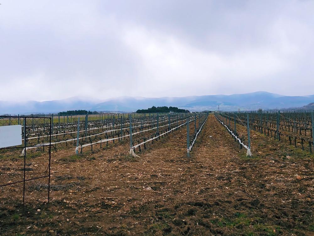 Chamlija vineyard during a winery visit on a wine tasting trip in Turkey