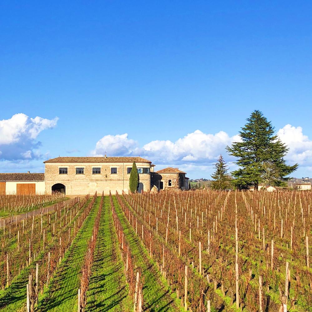 vineyard in front of Chateau Beau Sejour Becot visited during Bordeaux Saint Emilion wine trip