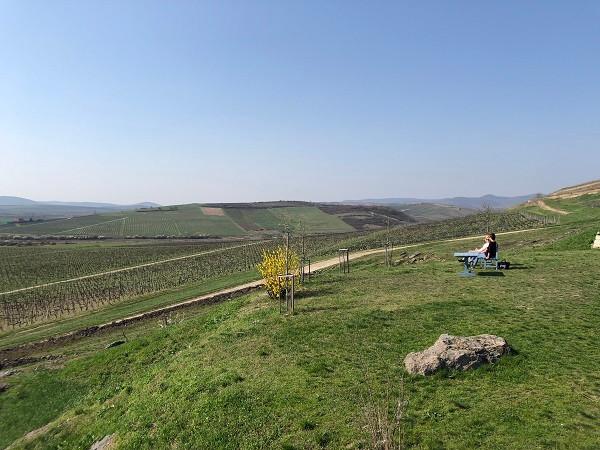panorama view from Disznoko vineyard in Tokaj during Tokaj wine tour