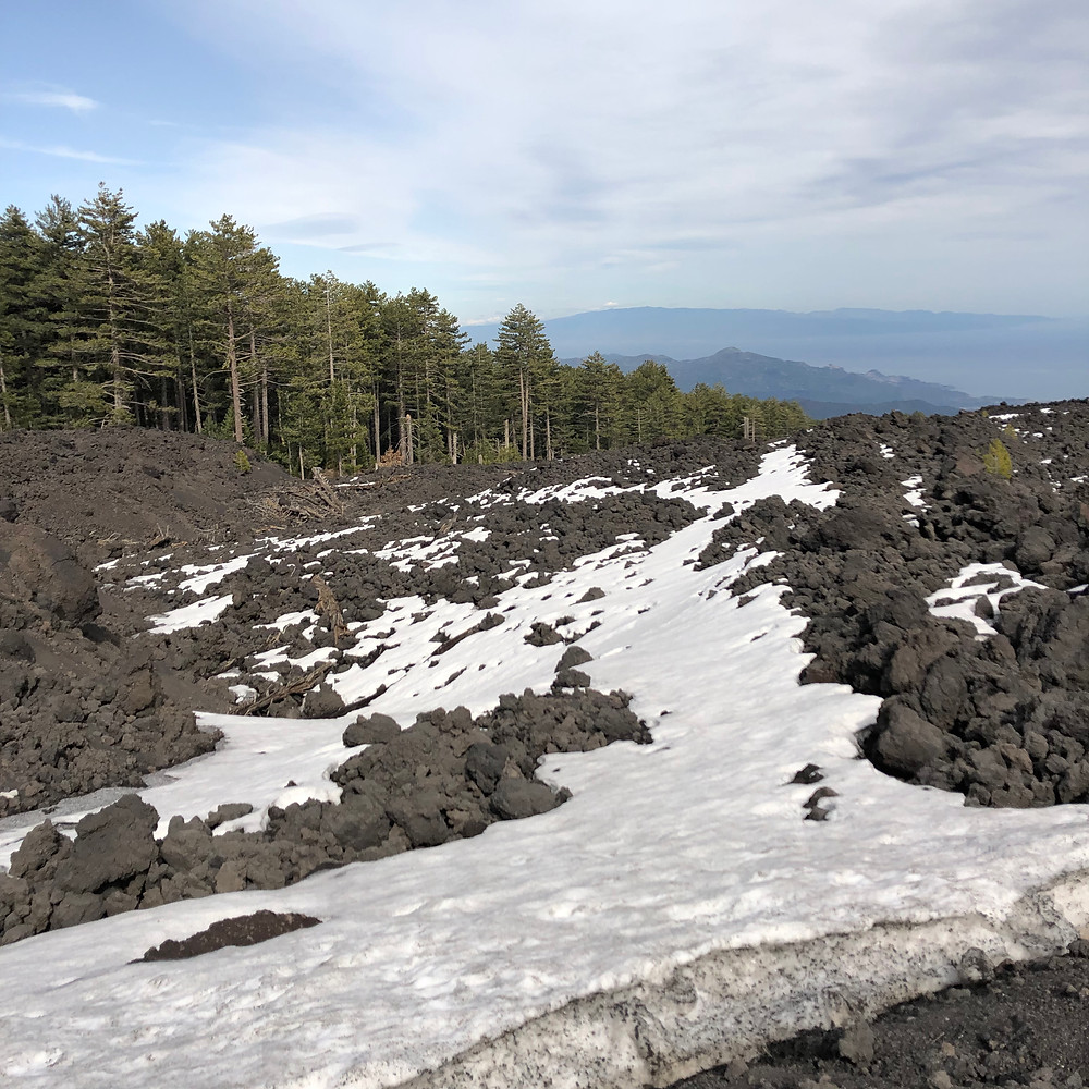 Etna volcano black lava under snow in a pine forest