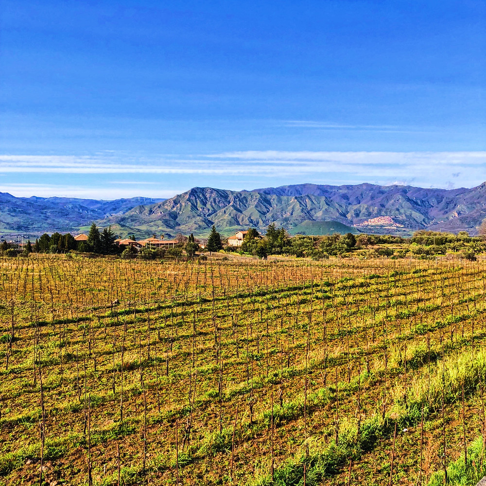 Mountain views from Pietradolce vineyards in Etna DOC wine region during Sicily wine tasting tour