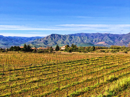 Discover the wines of Etna. Pietradolce