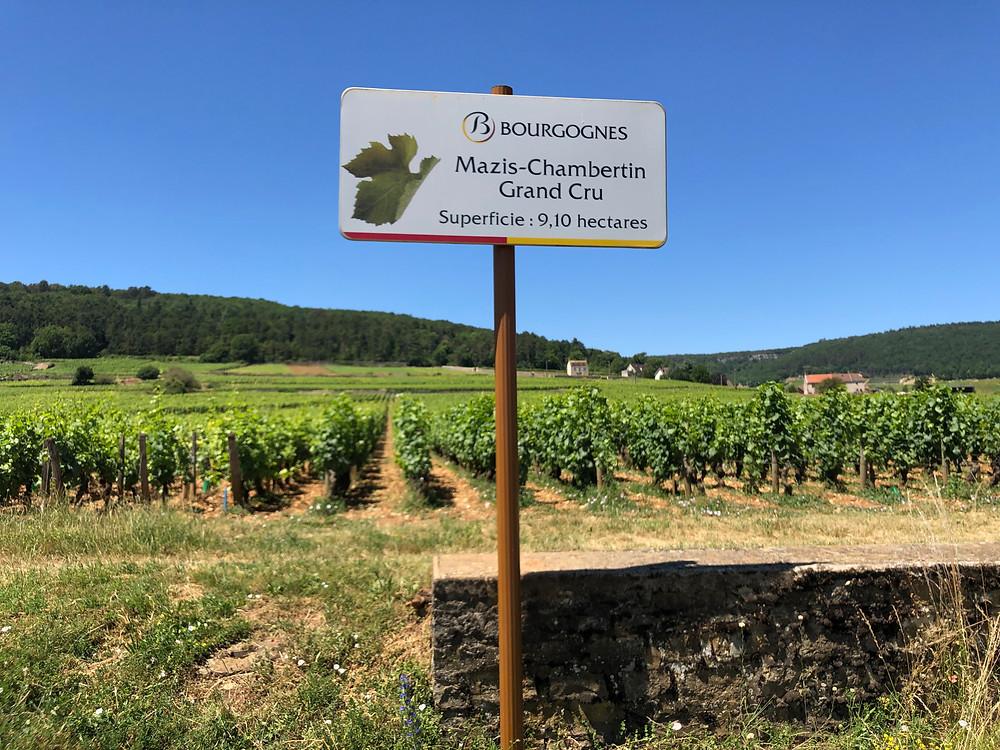 Mazis-Chambertin Grand Cru vineyard a climat of Gevrey-Chambertin village