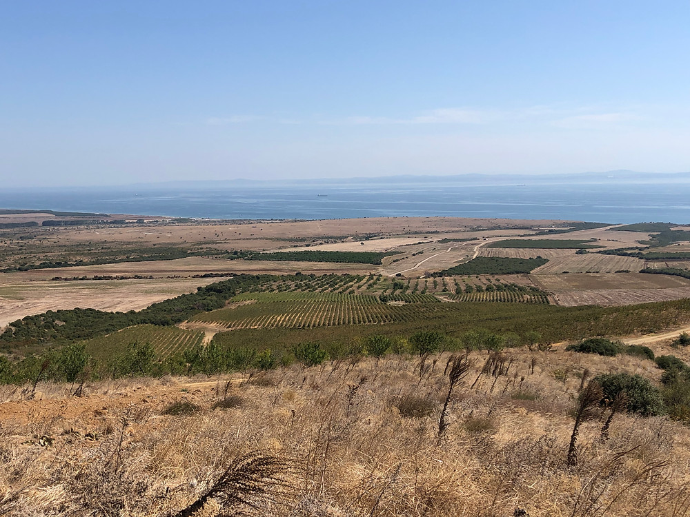 Marmara sea view from Chateau Gali vineyard in Thrace wine route