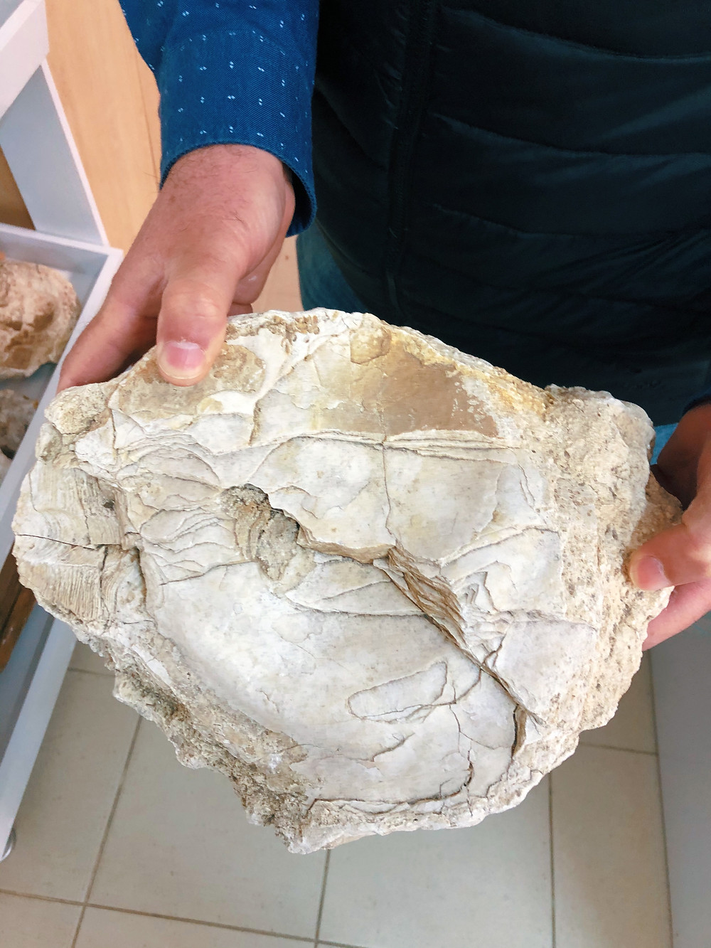 Fossilized oysters found in Trakya Turkey on Chamlija's vineyards during a wine tasting tour