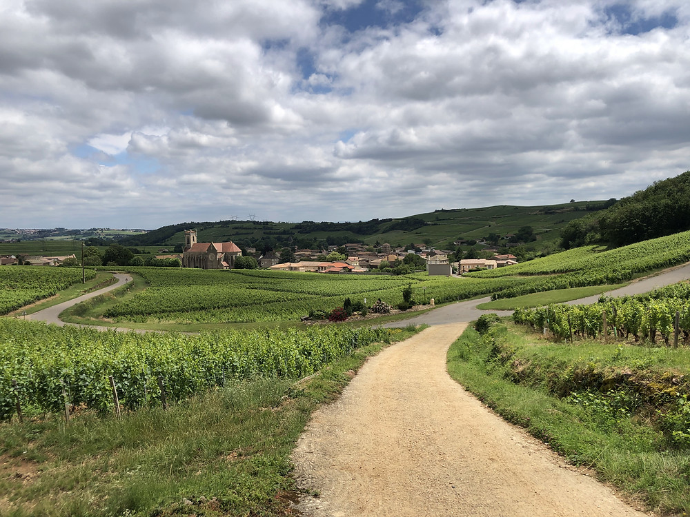 walking in the vineyards of Pouilly-Fuisse wine region in Fuisse village after a wine tasting at Domaine Thibert Pere et Fils