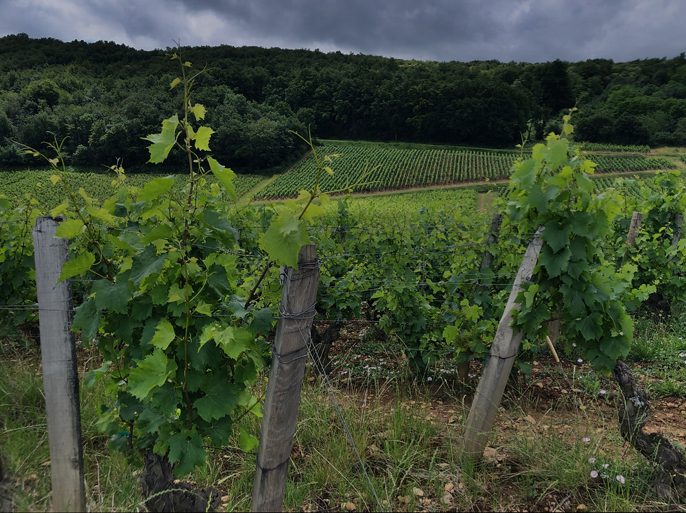 Storm above the vineyards in Southern Maconnais wine region on the way to Pouilly-Fuisse