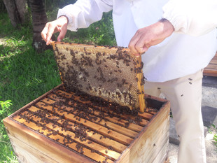 Shangri-La's Le Touessok Resort & Spa, Mauritius Gets Buzz-y with First Honey Extraction from On
