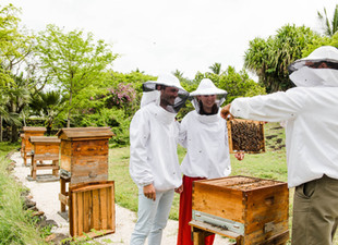 Shangri-La's Le Touessrok Resort & Spa, Mauritius Is Buzzy With New Bee Experiences