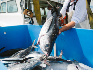 Fresh Produce and Sustainable Tuna in Manila