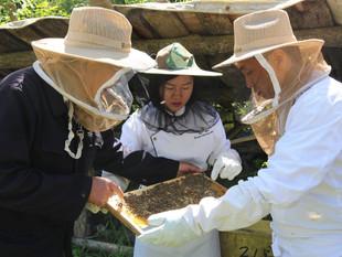 Abuzz In Xian: Shangri-La Hotel, Xian Donates 100 Beehives To Nature Reserve