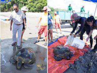 Shangri-La's Rasa Ria Resort & Spa, Kota Kinabalu Works With Sabah Wildlife Rescue Unit To Save