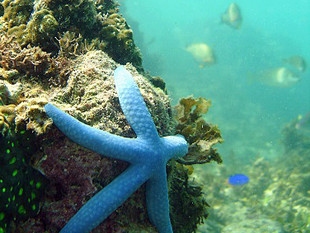 Cleaning Oceans for Marine Life to Return Home