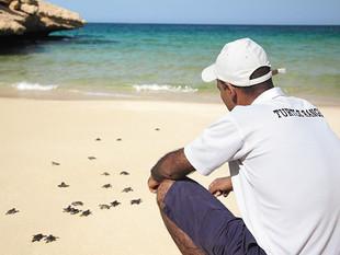 Buoyed By Barnacles: Shangri-La Barr Al Jissah Resort & Spa Helps Turtle Return to the Sea