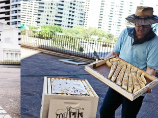 What's All the Buzz About in Sydney? Hotel-made Honey!