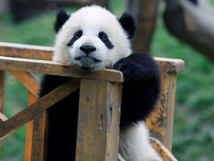 Care for Panda Project