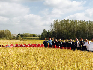 Harbin Hotels Highlight Rooted In Nature In Golden Rice Field