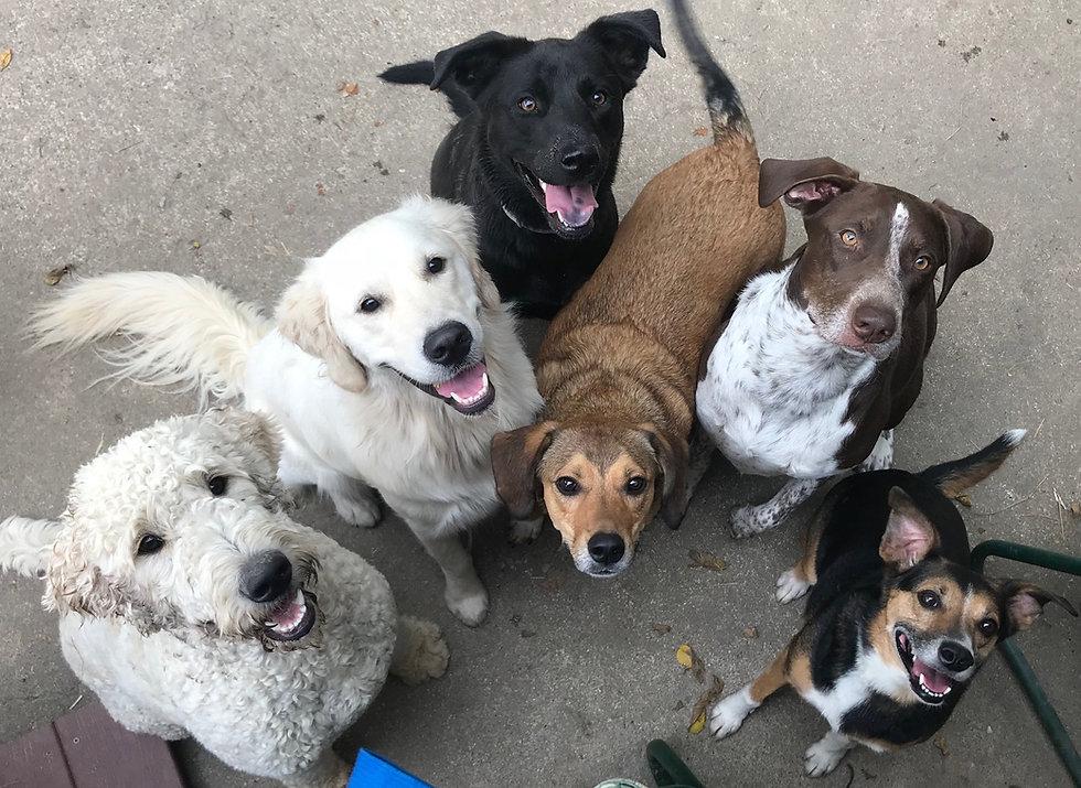 DogsLoveTreats!.jpg