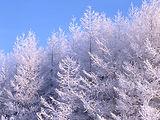 Hokkaido forests