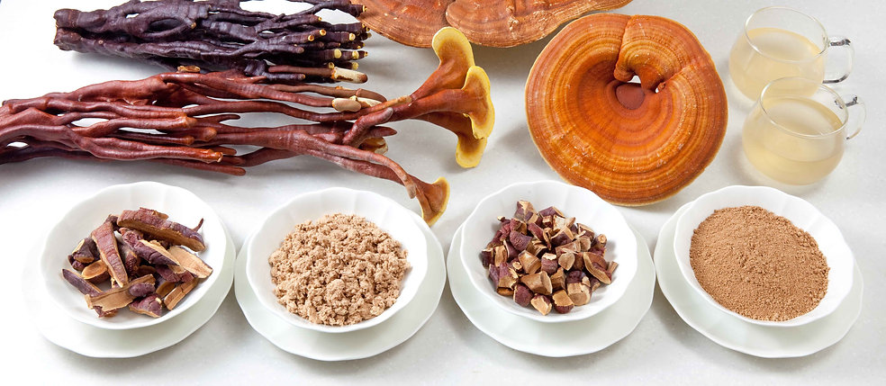 Made with our finest deer horn shaped reishi, this is the best reishi (ganoderma) product currently available